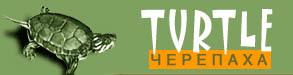 turtle Сервисы продвижения и раскрутки сайта